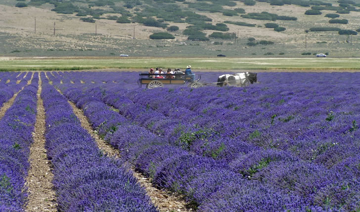 Young Living Essential Oil Farms